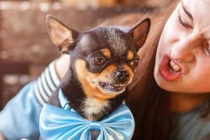 zangado chihuahua dog.teenage girl provoca seu cachorro, brincando com seu animal de estimação. foto