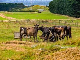 máquinas de fazenda leiteira e gado. Taranaki, Nova Zelândia foto