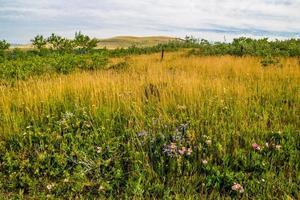 a flora é abundante ao redor do rancho. área de recreação provincial de glenbow ranch, alberta, canadá foto