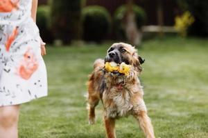 uma menina bonitinha está brincando com seu cão de estimação outdooors na grama em casa. foto fora de foco devido a cachorro correndo