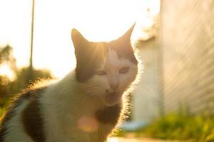 gato estranho com a boca aberta ao sol de perto foto