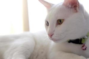 gato em casa foto