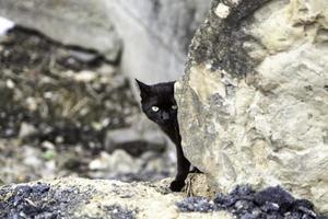 gato preto escondido na rua foto
