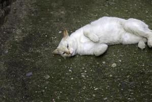 gato branco vadio na cidade foto