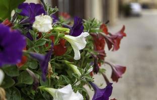 flores de sino coloridas foto