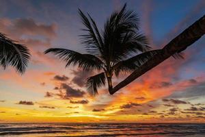 linda praia tropical e mar com silhueta de coqueiro ao pôr do sol foto