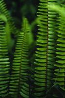 samambaia deixa fundo na natureza foto