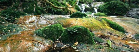 cachoeira e musgo na natureza tropical foto