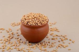 grãos de trigo em panela de barro com fundo de creme. fechar-se. foto