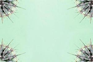 fundo de partes de um cacto em um fundo verde. textura de planta com espinhos foto