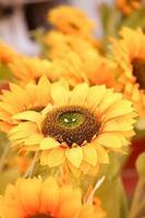 close-up de lindo girassol foto