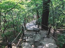 escada que desce na floresta. Parque Nacional de Seoraksan. Coreia do Sul foto