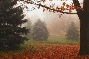 bela paisagem de outono. parque nebuloso. foto