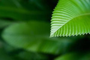 elegância em close-up verde profundo foto