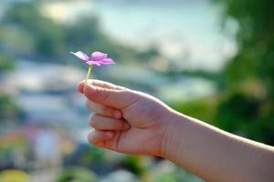 close-up e tiro de foco seletivo, pequenas flores cor de rosa nas mãos de uma criança com fundo desfocado de natureza tropical que é lindo, brilhante, macio, atraente e adorável no verão. foto