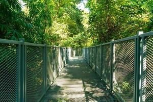 caminhe na floresta em caminhadas no dossel no jardim botânico queen sirikit chiang mai, tailândia foto