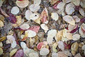 fundo de textura de outono para uso sazonal. foto