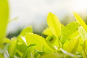 natureza deixa fundo verde no jardim na primavera sob o sol da manhã. papel de parede de paisagem de plantas verdes naturais. foto
