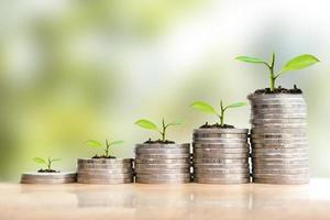 Economize dinheiro com pilha de moedas. crescendo seu conceito de negócio. planta jovem crescendo em moeda de pilha de dinheiro. foto