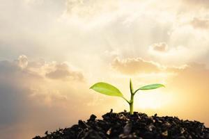 planta jovem crescendo no pôr do sol. salvar o meio ambiente ou o conceito de mundo do planeta Terra. mídia mista. foto
