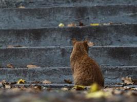 gato ruivo de rua na folhagem de outono foto