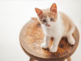 gatinho com lindos olhos azuis sentado em uma cadeira de madeira foto