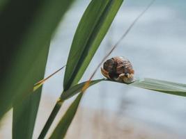 close-up de um caracol em uma folha verde foto