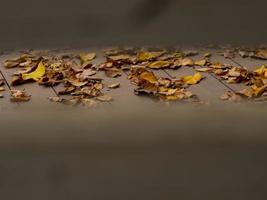 folhas amarelas caem no chão foto