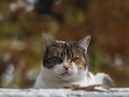 rua gato manchado na rua de outono foto