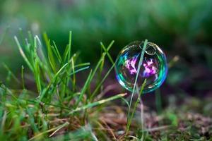 bolha na grama verde pela manhã foto