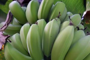 cacho de banana crua saborosa e saudável foto