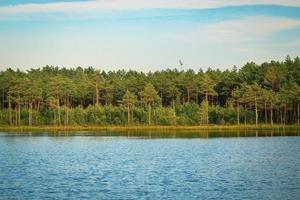 floresta crescendo ao longo da margem do lago com água ondulada em luz amarela foto