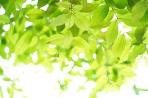 fundo de folha verde natural com foco seletivo. closeup natureza vista de folha verde em fundo desfocado de vegetação foto