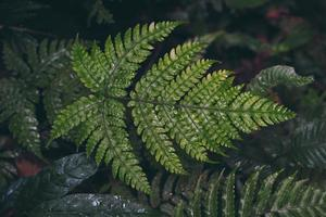 samambaia verde natural na floresta tropical foto