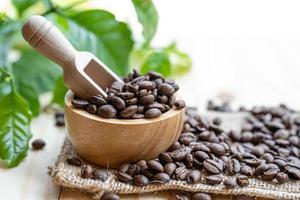 grão de café torrado médio em uma tigela de madeira com folhas na manhã fresca. foto