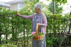 mulher idosa asiática sênior ou idosa cuidando do jardim em casa, hobby para relaxar e se exercitar com feliz. foto
