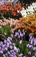 tulipas em um mercado foto