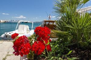 gerânio com barcos ao fundo no porto de porto santo stefano foto