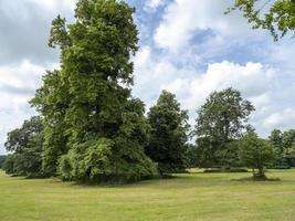 árvores em um parque rural inglês no verão foto