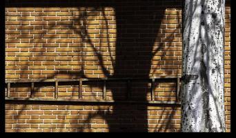 árvore e sua sombra projetada em uma parede de tijolos, madri espanha foto