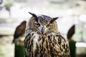 coruja real em uma exibição de aves de rapina, poder e tamanho foto
