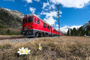 o trem vermelho do expresso bernina passa perto de pontresina na primavera foto