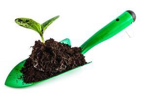 planta jovem em ferramenta de jardinagem foto