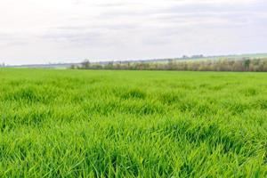 campo de textura de grama verde fresca como pano de fundo foto