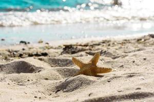estrela do mar na areia no oceano em um dia quente de verão foto