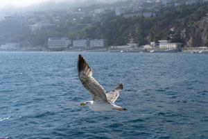 gaivota voadora branca no fundo do mar azul foto