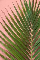 folha de palmeira estava sobre fundo rosa. conceito de fundo de verão. foto