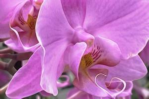 flor de orquídea em close-up para o fundo foto