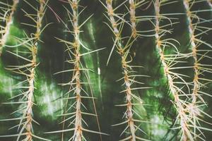 close-up de um pequeno cacto, vista superior do plano de fundo da natureza foto