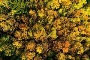 um drone sobe acima de uma floresta multicolorida nos Vosges. coroas de árvores amarelas, laranja e vermelhas. foto